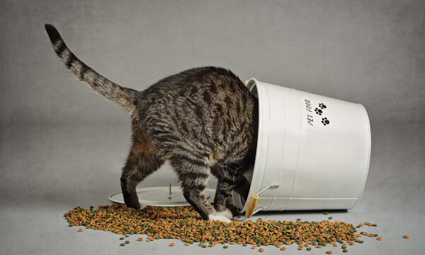 肥満体系なでぶ猫がエサ入れを倒してキャットフードが散らばっている