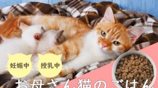 子育てを頑張るお母さん猫
