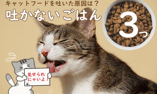 キャットフードを吐いている猫