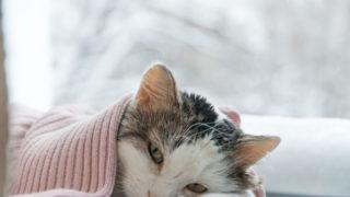 弱って布団で寝ている猫