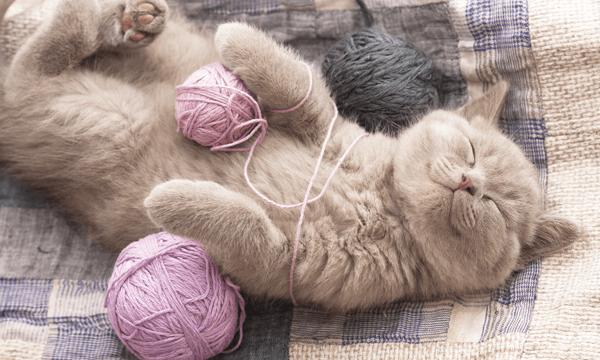 毛糸の玉と寝ている灰色の猫