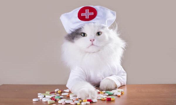 薬が散らばる薬とナース服の白猫