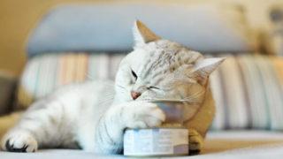 猫缶とベージュ色の猫