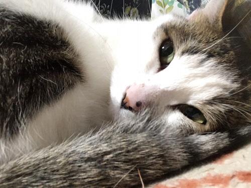 絨毯の上で寝てる猫