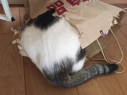 かみちぎったボロボロの紙袋に入る猫のおしり