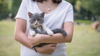 猫エイズの猫を公園で拾った白いTシャツの女性