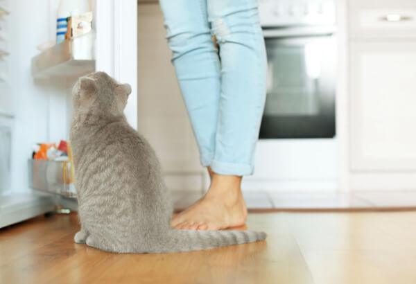 キャットフードを冷凍庫に保存している飼い主と灰色の猫