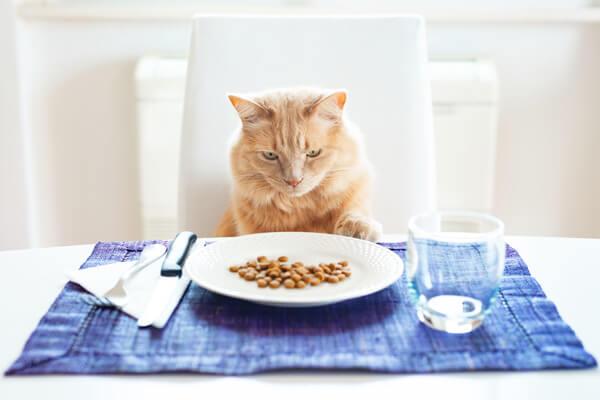 キャットフードのサンプル試食会をする猫