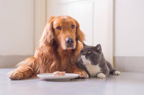 犬と猫が寄り添ってをドックフード見つめている