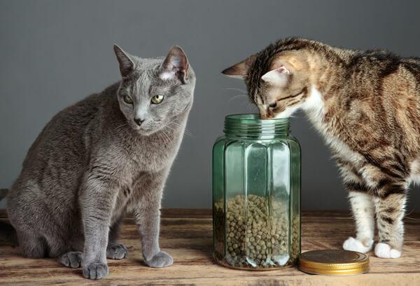 キャットフードの賞味期限が切れてないか確かめている猫