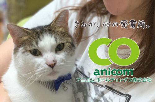 動物保険で一番有名なアニコムは猫にもおすすめ