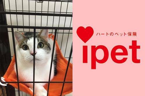 愛猫の長生きを一緒に支えてくれる猫保険のアイペット