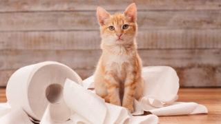 トイレットペーパーにくるまれているクリーム色の猫