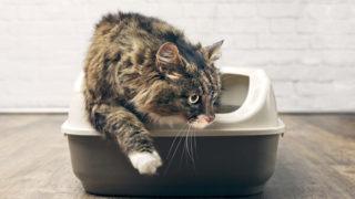 猫用箱型トイレのおすすめ