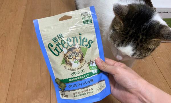 グリニーズは危険か確かめている猫