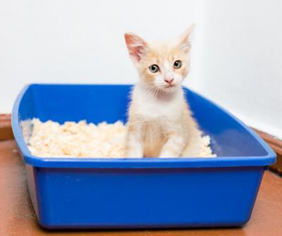 猫トイレオープンタイプ