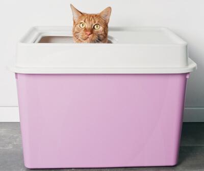 猫トイレ上から出入りするタイプ