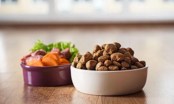 プレミアムキャットフードが白い陶器に入っているその横に野菜と生肉が入ったお皿が並んでいる