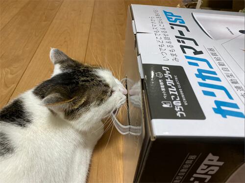 カリカリマシーンSPの箱についている取っ手をかじる猫