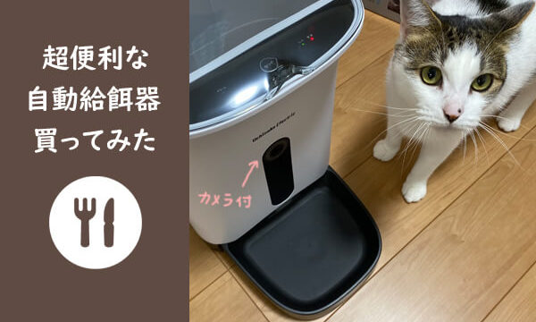 自動給餌器のカリカリマシーンSPと愛猫のコーン