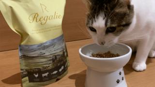 レガリエと白い猫皿とレガリエを美味しそうに食べる猫