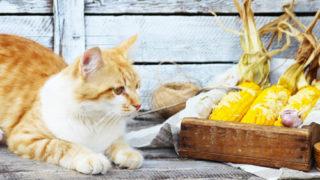 茶色いかごに入った3本のトウモロコシと茶と白のネコ