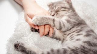 ふかふかの灰色のベットの上で飼い主の手を握りながら寝る猫
