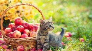草原の中でリンゴがかごいっぱいに入ってる横できょろきょろしている猫