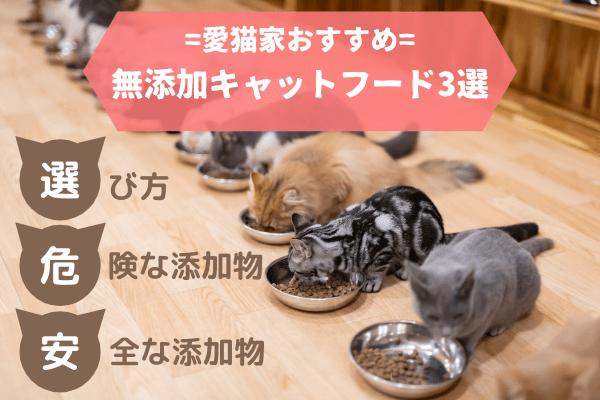 無添加のキャットフードを食べる猫