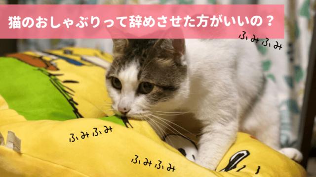 猫のおしゃぶり