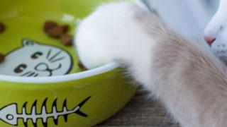 ペット用洗剤で洗った綺麗なお皿でご飯を食べる猫